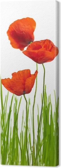 Quadro su Tela Immagine di primavera con papaveri rossi ed erba ...