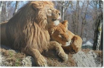 Quadro su Tela Leone e leonessa