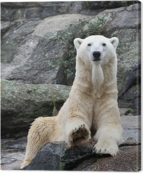 Quadro su Tela Orso polare ritratto