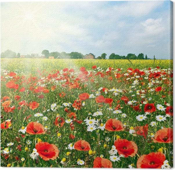 Quadro su Tela Prato di fiori con i papaveri • Pixers® - Viviamo per ...
