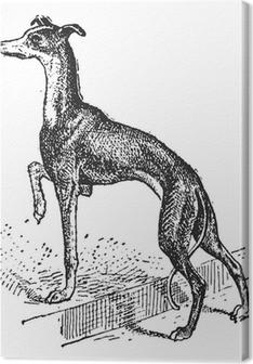 Quadri su tela premium Greyhound, vendemmia, incisione