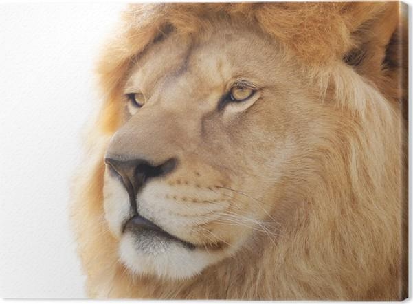 Quadro su tela pride of lion u2022 pixers® viviamo per il cambiamento