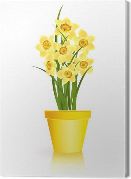 Quadro Su Tela Primavera Giardinaggio. Fiori Narciso Giallo In Vaso Su  Bianco