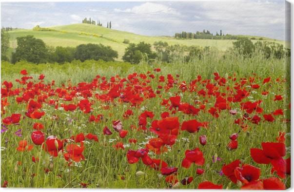 Quadro su Tela Primavera in Toscana, paesaggio con papaveri • Pixers ...