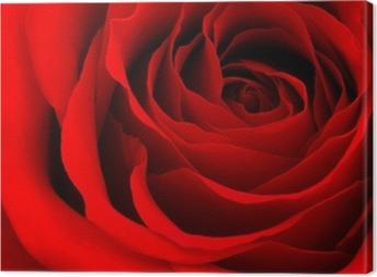 Quadro su Tela Red rose