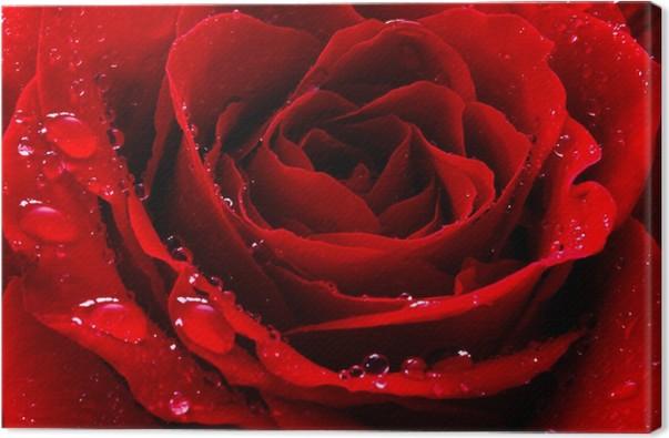 Quadro su tela rosa rossa con gocce d 39 acqua pixers for Finestra con gocce d acqua