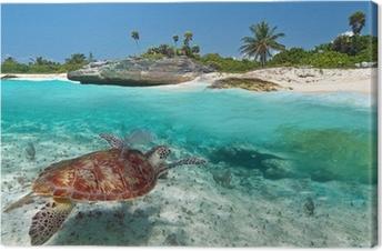 Quadro su Tela Scenario del Mar dei Caraibi con la tartaruga verde in  Messico 772f4040b893
