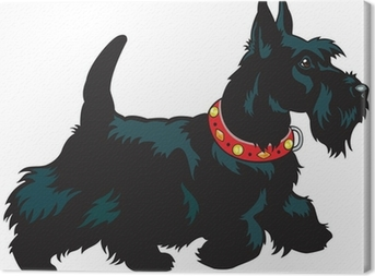 Quadro su Tela Scottish terrier