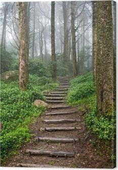 Quadro su Tela Sentiero nella foresta