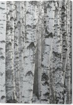 Quadro su Tela Sfondo di inverno Betulla Foresta
