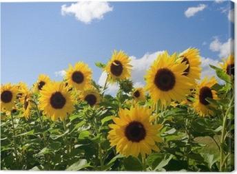 Quadro su Tela Sonnenblumen
