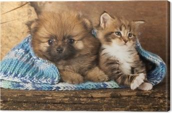 Quadro Su Tela Gruppo Di Cani E Gatti A Sfondo Bianco Cane E Gatto