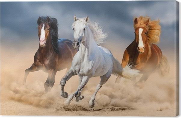 Quadro su Tela Tre cavalli con una lunga criniera galoppano nel ...