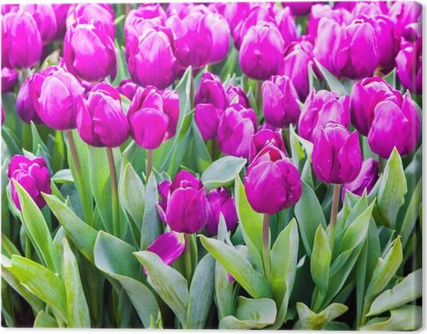 Quadro su Tela Tulipani colorati. Fiori primaverili bello. sfondo di ...