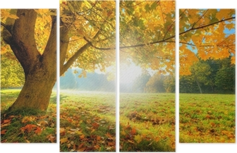 Beautiful autumn tree with fallen dry leaves Quadriptych
