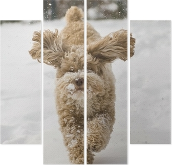Cute Cockapoo Puppy playing in the snow