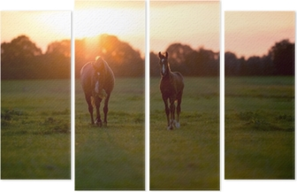 Mother horse with foal on farm land at sunset. Geesteren. Achter Quadriptych