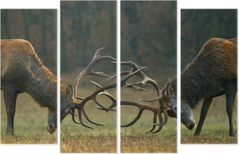 Red deer fight Quadriptych