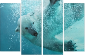 Quadriptyque Ours polaire sous-marine attaque