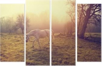 Quadrittico Bellissimo cavallo bianco