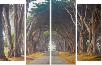 Quadrittico Point reyes cypress tree tunnel