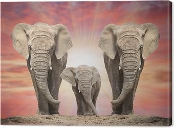 Quadro em Tela African elephant family on the road.