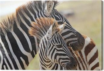 Quadro em Tela Baby zebra with mother