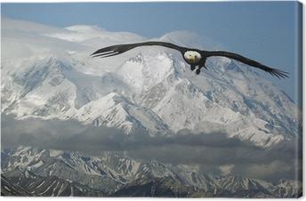 Quadro em Tela bald eagle in mountains