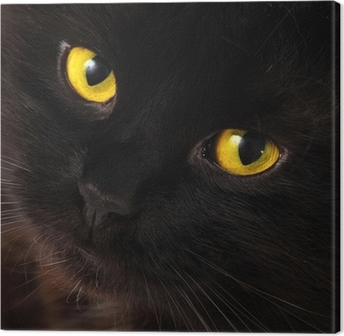 Quadro em Tela Black cat looking to you with bright yellow eyes