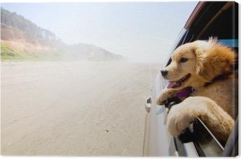 Quadro em Tela Cachorro olhando pela janela de um carro