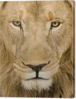 Quadro em Tela Close-up on a Lion's head (4 and a half years) - Panthera leo
