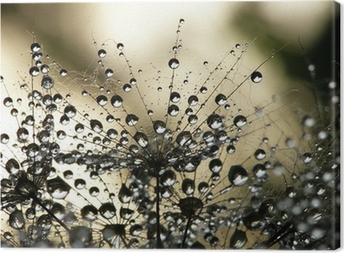Quadro em Tela Dandelion seed wet