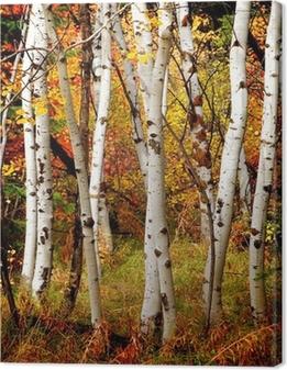 Quadro em Tela Fall Birch Trees