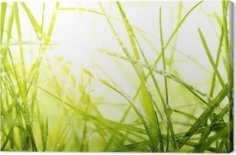Quadro em Tela green summer grass and sunlight