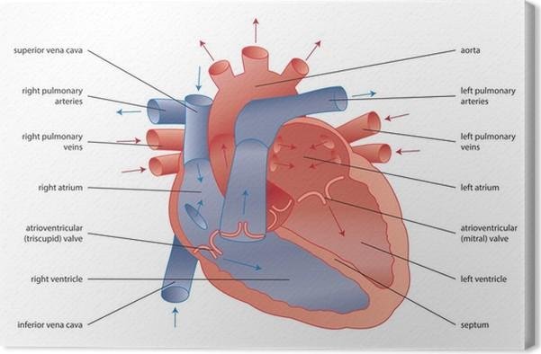 Quadro em tela human heart pixers vivemos para mudar quadro em tela human heart ccuart Choice Image
