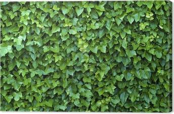 Quadro em Tela ivy wall