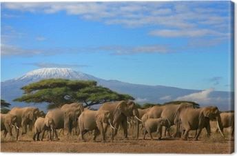 Quadro em Tela Kilimanjaro With Elephant Herd