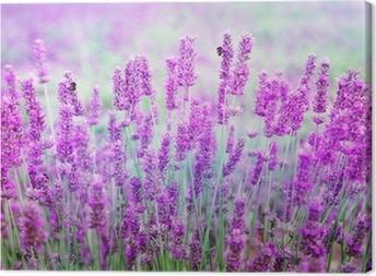 Quadro em Tela Lavender