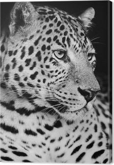 Quadro em Tela Leopard