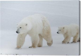 Quadro em Tela Mãe urso polar e filhote que anda no gelo