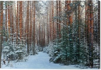 Quadro em Tela pine forest, winter, snow