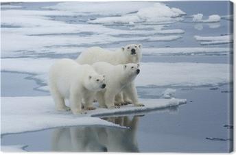 Quadro em Tela Polar Bear & Yearling Cubs