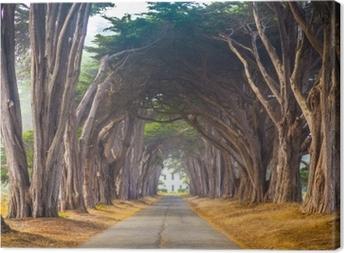 Quadro em Tela Ponto reyes cyress árvore túnel
