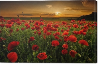 Quadro em Tela Poppy field at sunset