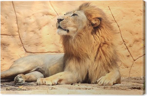 Quadro em tela portrait lion u2022 pixers® vivemos para mudar