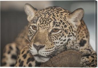 Quadro em Tela Portrait of leopard