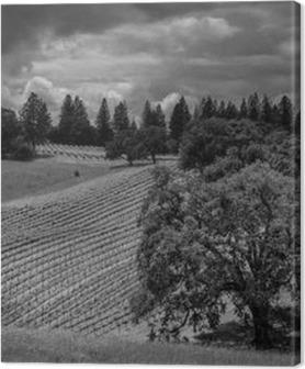 Quadros em tela premium Agite Ridge Ranch Vineyards