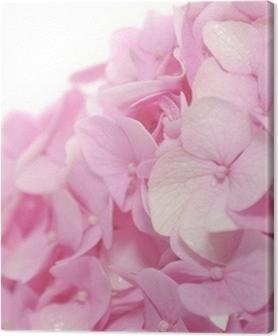Quadros em tela premium Beautiful Pink Hydrangea Flowers on White Background
