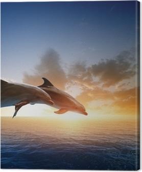 Quadros em tela premium Dolphins jumping