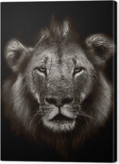Quadros em tela premium Lion